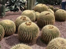 Echinocactus (Link & Otto 1827)